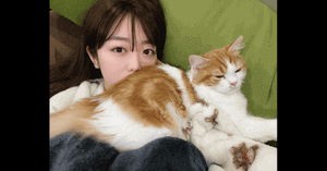 峯岸みなみと猫の画像