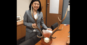 牧島かれんの事務所にある鹿の角の画像